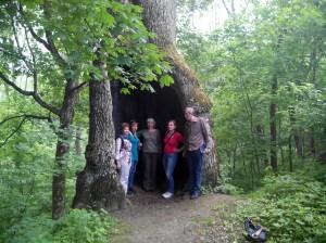 многовековой дуб на территории Рыхловского монастыря.